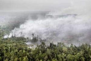 kebakaran hutan riau (foto: goriau.com)