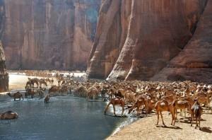 Eksotika Guelta d'Archei,