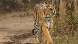macan india