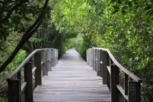 Foto: Mangrove di Bali yang menjadi tujuan wisata