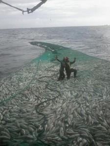 Kisah Manusia Berdiri di Tengah Lautan