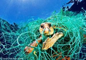 turtle_entangled