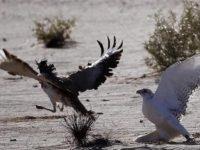 Pangeran Qatar Diserang di Pakistan