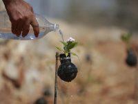 [FOTO] Wanita Palestina Tanam Bunga di Bekas Granat Israel