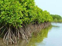 Hutan Gambut untuk Halau Tsunami