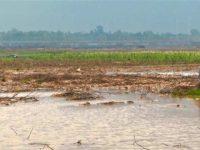 Lahan pertanian Gaza terkena banjir.